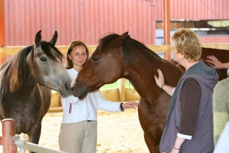 Seminare mit Pferden für Frauen